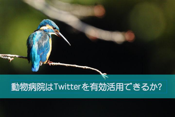 動物病院はTwitterを有効活用できるか?