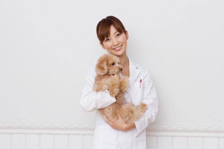 獣医療業界の発展のために